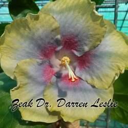 zeak-doctor-darren-leslie-80a5e19255f6dae7c5fcb03defacc9efbb0d21c1