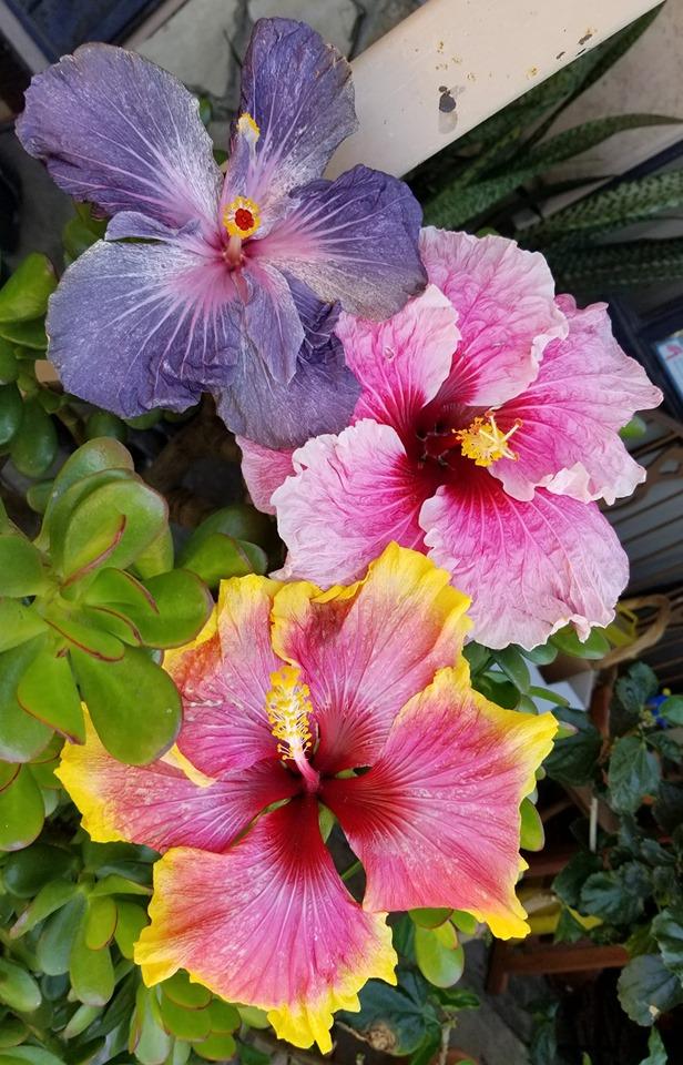 malou-bloom-assortmetn-6-23-89dd51632a112d07b8d6a47595847691c0b755f5