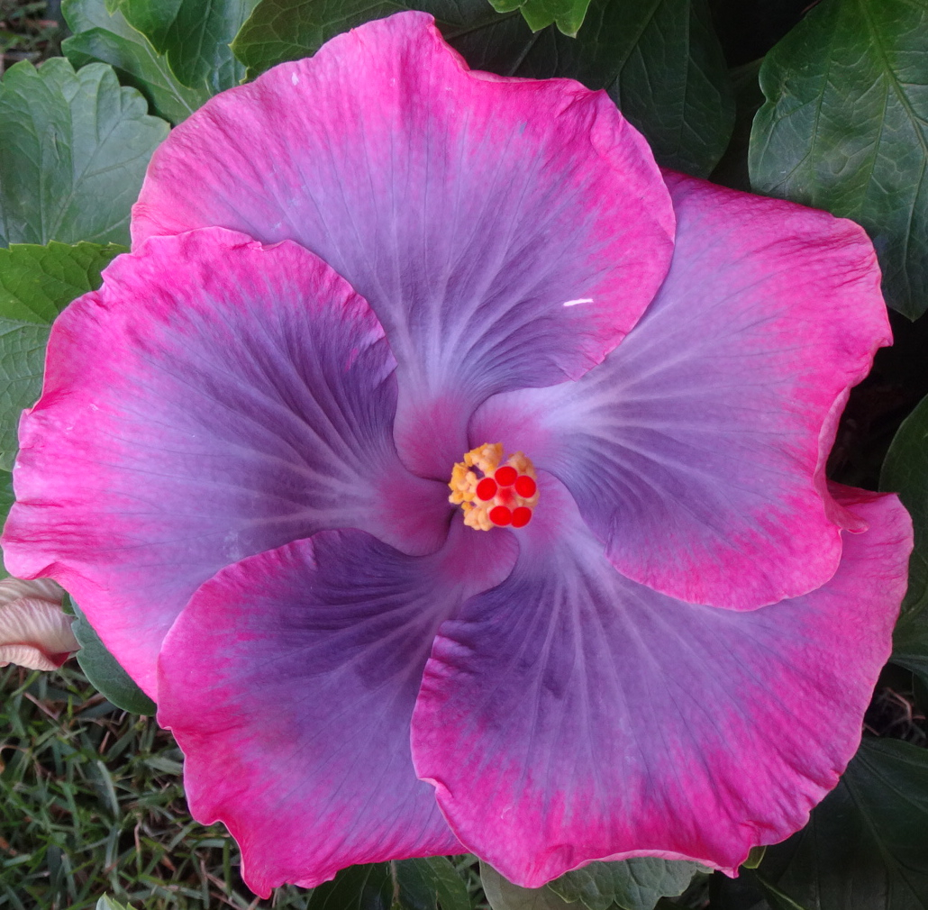 tahitian-lavender-mist-9-17_1